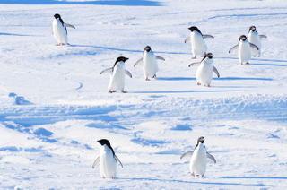 071216_penguin_s