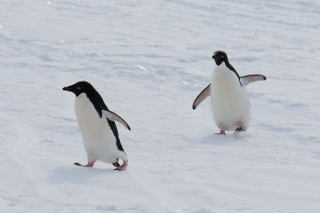 090202_penguins